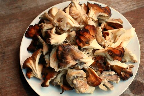 How to Clean a Hen of the Woods Mushroom