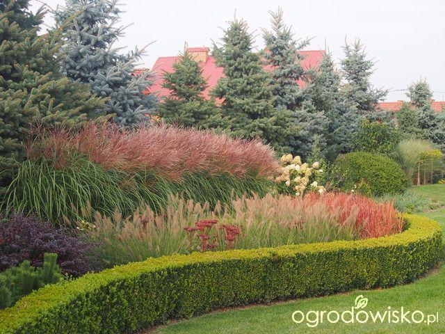 Marzenia i plany vs. rzeczywistość - strona 427 - Forum ogrodnicze - Ogrodowisko