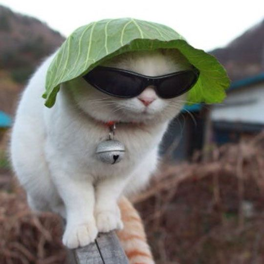 This cat is wearing a lettuce hat. Your argument is invalid.