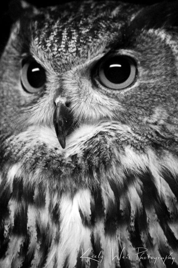 Le Owl by KeelyWeisPhotography
