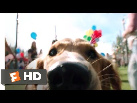 A Dog's Purpose - Doggie Matchmaker: Bailey (Josh Gad) accidentally pushes Ethan (K.J. Apa) to talk to a girl (Britt Robertson). BUY THE MOVIE: https://www.fandangonow.com/details/movie/a-dogs-purpose-2017/MMV8BCF1AE8CFD39CA83BC2FAD05ECF776D0?cmp=Movieclips_YT_Description  Watch the best A Dog's Purpose scenes & clips: https://www.youtube.com/playlist?list=PLZbXA4lyCtqqFLj2uxn3iprHYInyJ-UAG  FILM DESCRIPTION: A devoted dog (Jo...