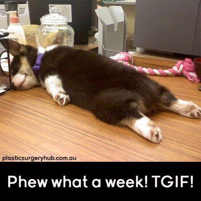 "The meaning of ""dog tired."" www.plasticsurgeryhub.com.au #DogTired #Funny #Weekend #Friday #TGIF"