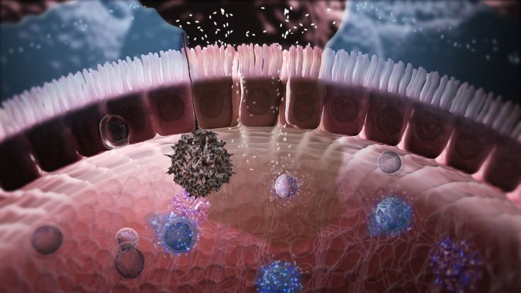 Immunology in the Gut Mucosa, via YouTube. Explains the workings of the gut & how inflammatory bowel can occur.