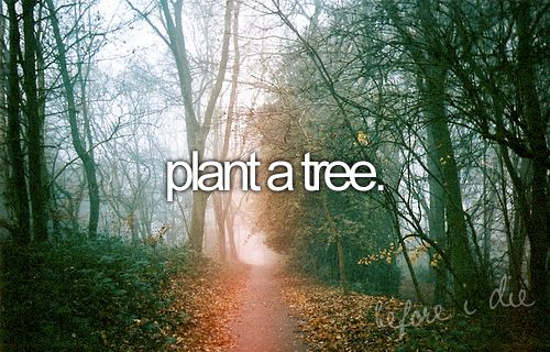 I have planted a few ... so this is more like Many Many trees... Hey this could be a cool birthday tradition .. Plant a tree  every year of your life!!