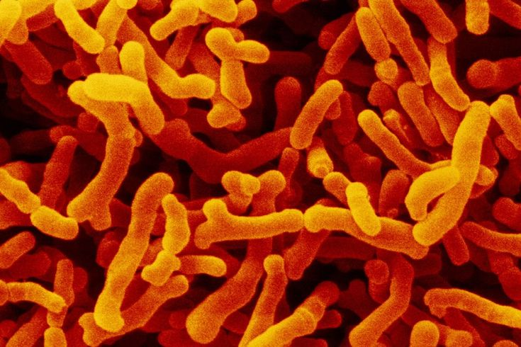 Bacteria in the gut have been shown to help or hinder cancer treatments in mice – diet changes or probiotics could be used to improve therapies