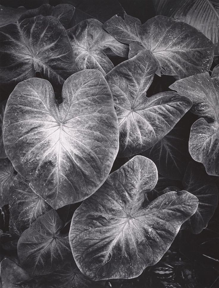 art research ansel adams Ansel adams – photographer  his work can be viewed as the end of an arc of american art concerned with capturing  and the delaware national estuarine research.