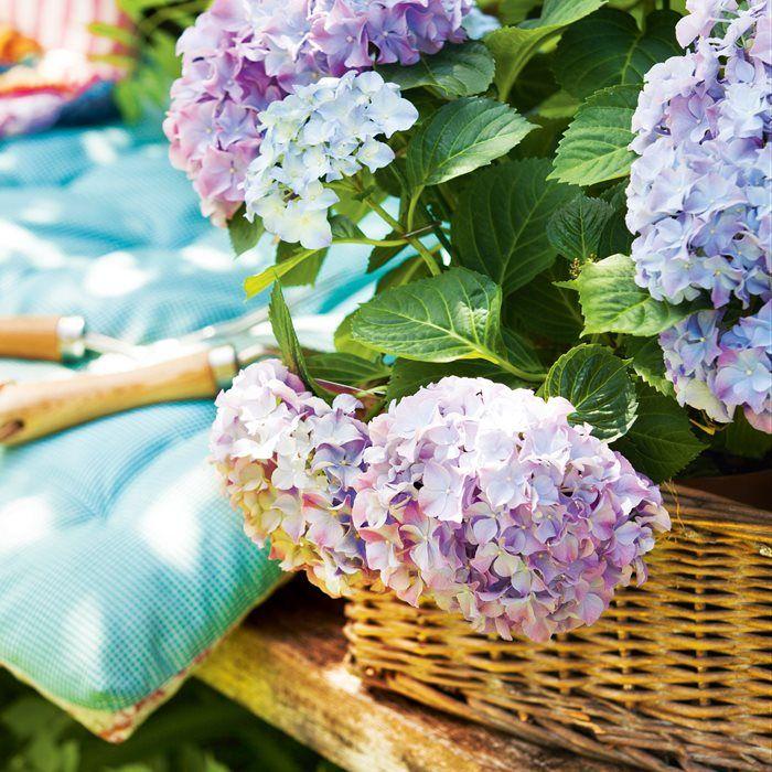 Plantas Resistentes Al Sol Y Al Calor Para Terrazas