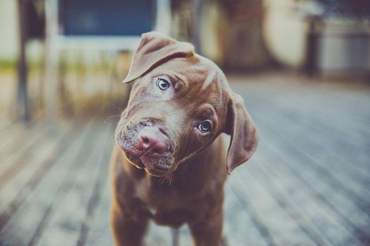 Outro dia escrevi sobre a audição dos cães. No texto, expliquei que trocamos, aqui na nossa creche para cães, o som da campainha. O som atual é menos agudo e mais baixo, respeitando a sensibilidade…