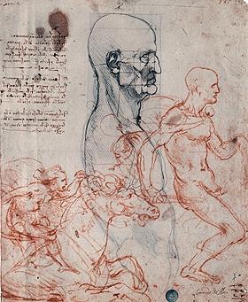 Studio di anatomia umana, Leonardo da Vinci