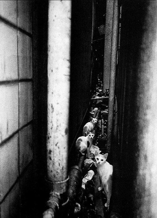"""Daido MORIYAMA, """"Shinjuku, 2002"""""""