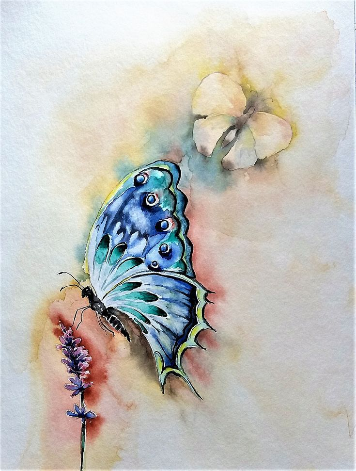 Aquarell Schmetterling Lavendel Mit Bildern Schmetterling