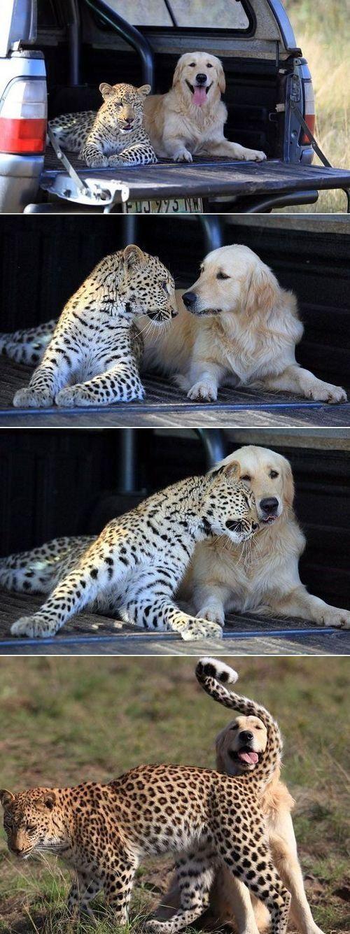 I remember seeing this story on Animal Planet. Sooooo sweet!