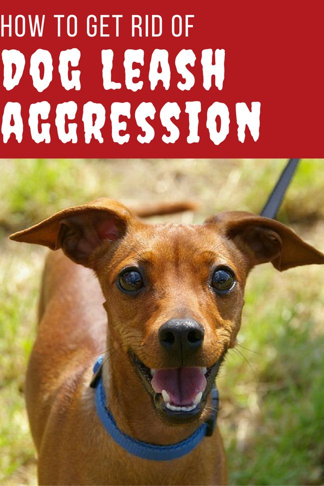 how to train a dog food aggression