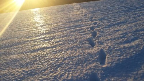 Footsteps at sunset