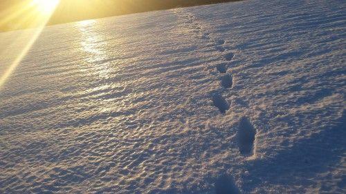 Winter in the mountains: http://mihaelaburuiana.com/cartisicalatorii/traseu-cota-1400-cabana-zanoaga-scropoasa/