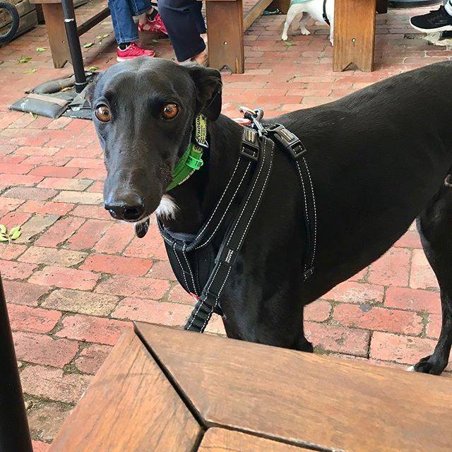 Waiter I Ll Have The Vegemite Toast With A Side Of Eggs Please