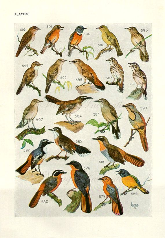 Bird 1940s Gould Prints