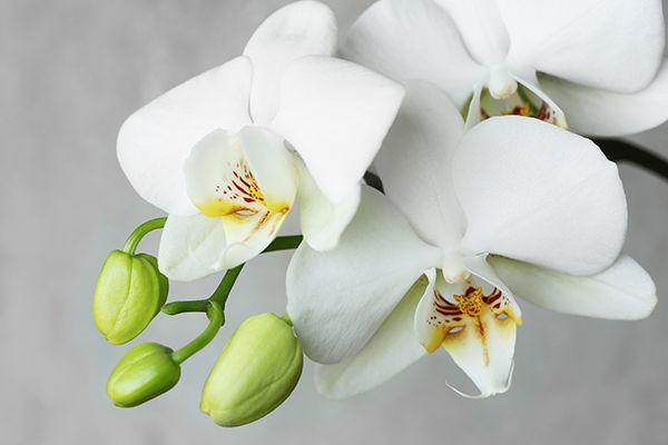 Orchideák a lakásban? Igen! Megmutatjuk, hogyan... - Kert - lakaskultura.hu