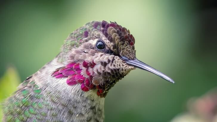 1000+ Ideas About Hummingbird Wallpaper On Pinterest
