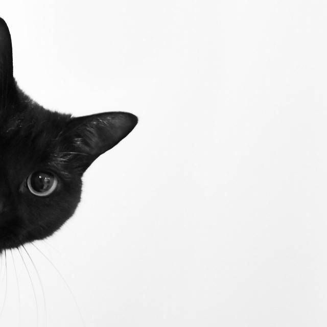 Cute Cat Wallpaper Hd For Android And Desktop Cat Background Iphone Wallpaper Cat Cat Wallpaper