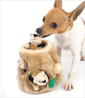 IThe 10 Best Toys for Small Dogs #7 - Hide-a-Squirrel Dog Toy Read more at http://theilovedogssite.com/the-10-best-toys-for-small-dogs/#zK8wjDDgXC1vZTXu.99