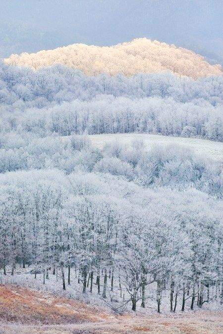 frosty forests.