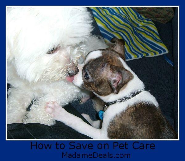 How To Save on Pet Care http://madamedeals.com/how-to-save-on-pet-care/ #pets #inspireothers