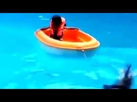 Шоу #дельфинов! Show #dolphins!