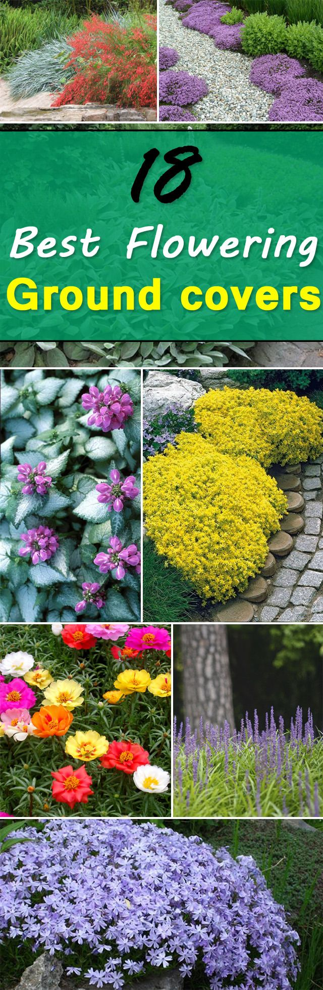 Check out these 18 Flowering Ground Cover Plants, you'll find some best low growing plants on this list, they're not only easy to grow but looks beautiful too.