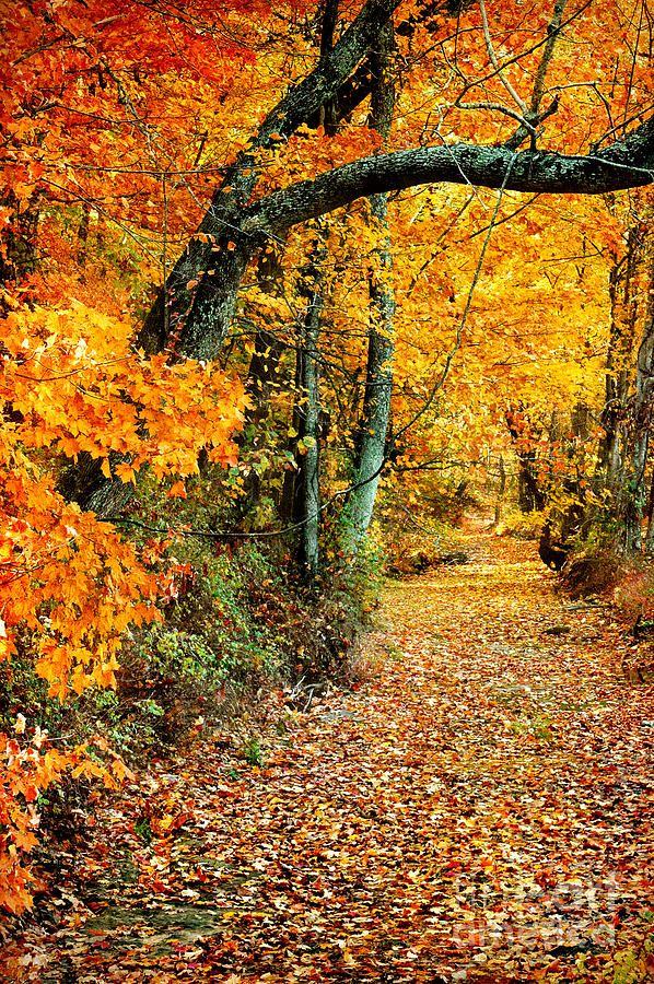 Gorgeous Fall Color. Wooded Pathway in Autumn.