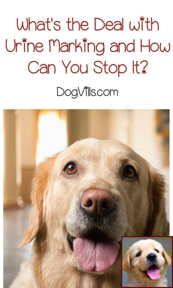 1 Have Dog Behavior Problems Learn About Dog Behavior At 3 Years