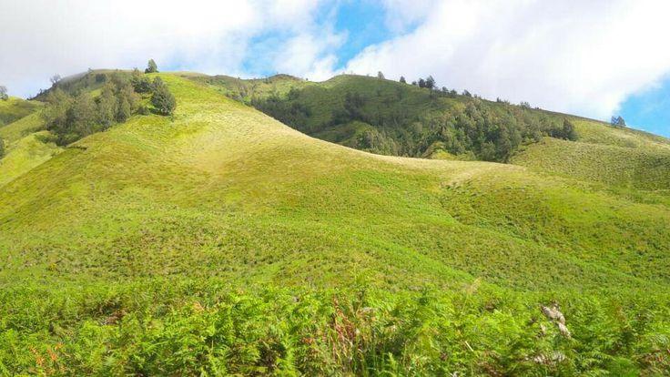 Teletubbies Hill, Mount Bromo, Indonesia (Wanti Ringo)