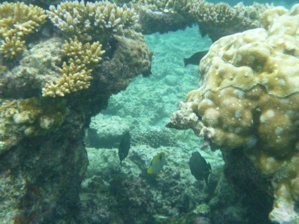 Beautiful Coral Snorkeling in Lifou