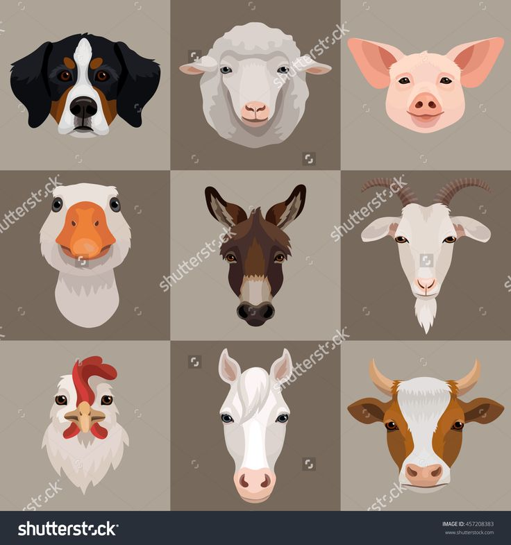 Vector domestic farm animals icon set, dog, ram, goat, pig, goose