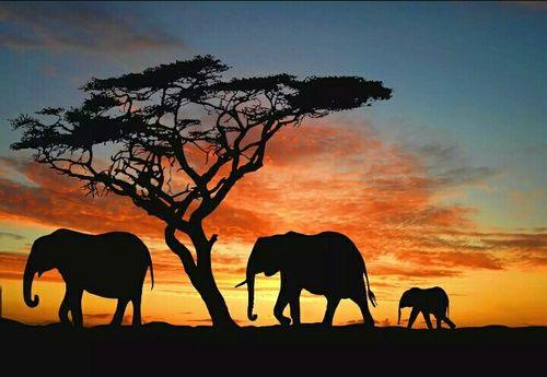 Imagen de elephant, africa, and sunset