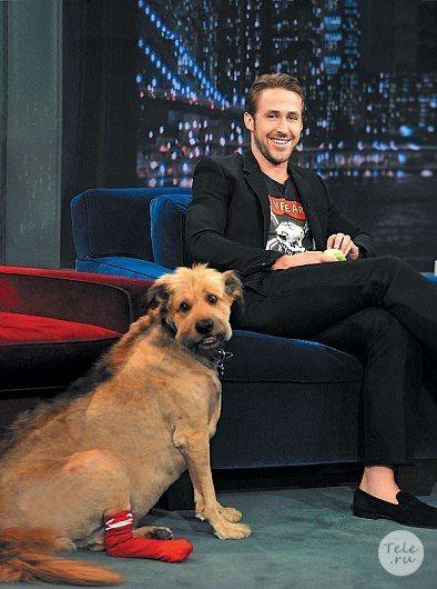Райан Гослинг: «Отношения с моей собакой — самые долгие в моей жизни!»