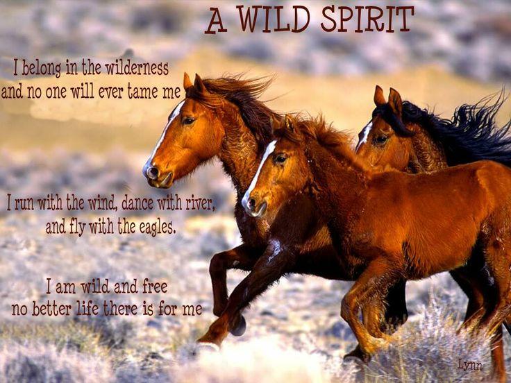 Wild horses wild spirit