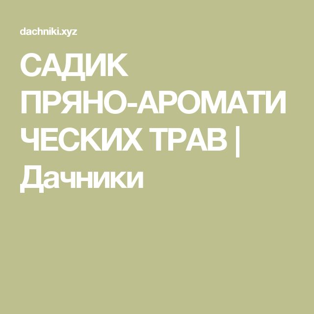 САДИК ПРЯНО-АРОМАТИЧЕСКИХ ТРАВ   Дачники
