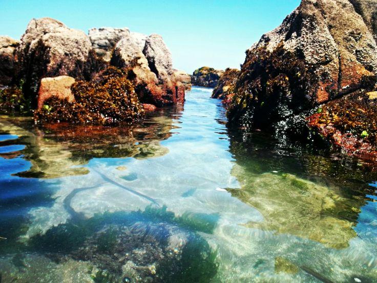 Playa El Chungungo, Maitencillo. Quinta región, Chile.