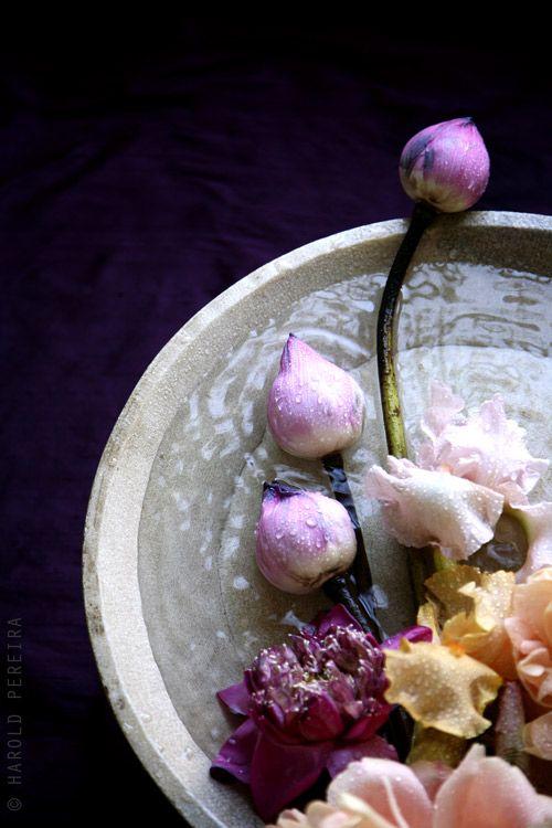 Water, petals