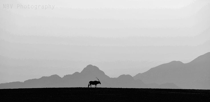 View this image in full screen to explore its real beauty & feel free to share the image.  Silhouette of an #Oryx. This was shot in Sossusvlei, a sand dune desert in #Namibia. The composition of this image was made at sunrise where the clouds at the horizon were used as if there are mountains at a distance. I've tried a black and white to make the shadows stand out.  #Wildlife #Photography #NBVphotography #Nature #Adventure #Travel