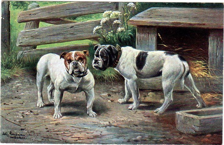 RARE c1910 Dog Postcard ENGLISH BULLDOGS Artist Signed