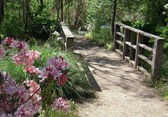Arthur L. Menzies Garden of California Native Plants in spring. Photo by David Kruse-Pickler.