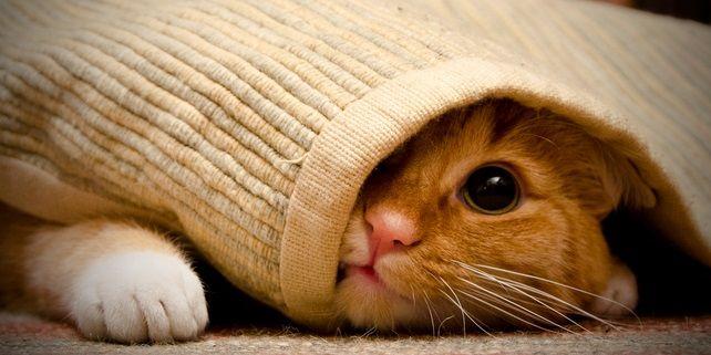 Heeft je kat een ongelukje op het vloerkleed gehad of ontdek je 's ochtends dat de hond een verrassing op de gloednieuwe deurmat heeft achtergelaten? Jakkes... maar geen paniek. Zo verwijder je het resultaat van kleine ongelukjes snel en makkelijk. Dag vieze vlekken en nare geurtjes, hallo schoon en fris tapijt! Lees ook Te lief:…