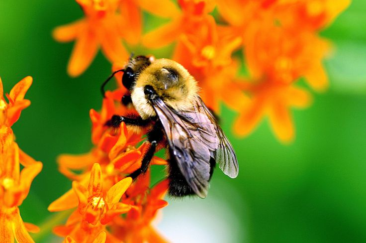 <p>Bees are some of the hardest working creatures on the planet, and because of their laborious work ethic, we owe many thanks to this amazing yet often under appreciated insect.</p>