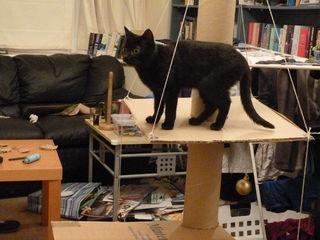 Cat Activity Centre how too P1020417.JPG