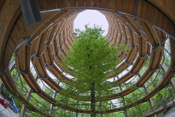 """A 40-metres-high spiral tower in the forest of Prora on the Baltic Sea island of Ruegen, northeastern Germany. The tower is part of a new 125 kilometre-long """"Baumwipfelpfad"""" (tree top trail) through the mixed forest of the region. The project around a new natural heritage centre is scheduled to be finished at the end of May 2013."""
