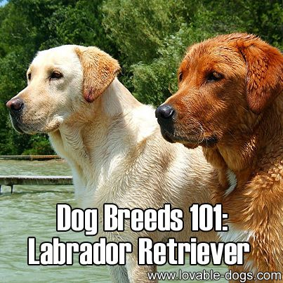 1127 best feral cat tnr resources images on pinterest for Dog house for labrador retriever