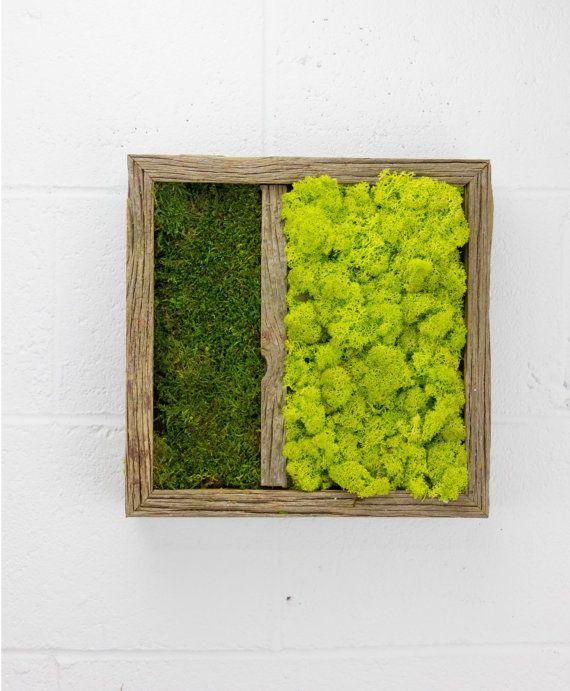 Twinz water free green wall art moss and preserved plants vertical garden