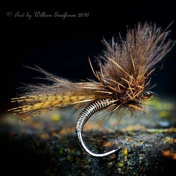17 best images about trout flies on pinterest peacocks for Fishing with crickets